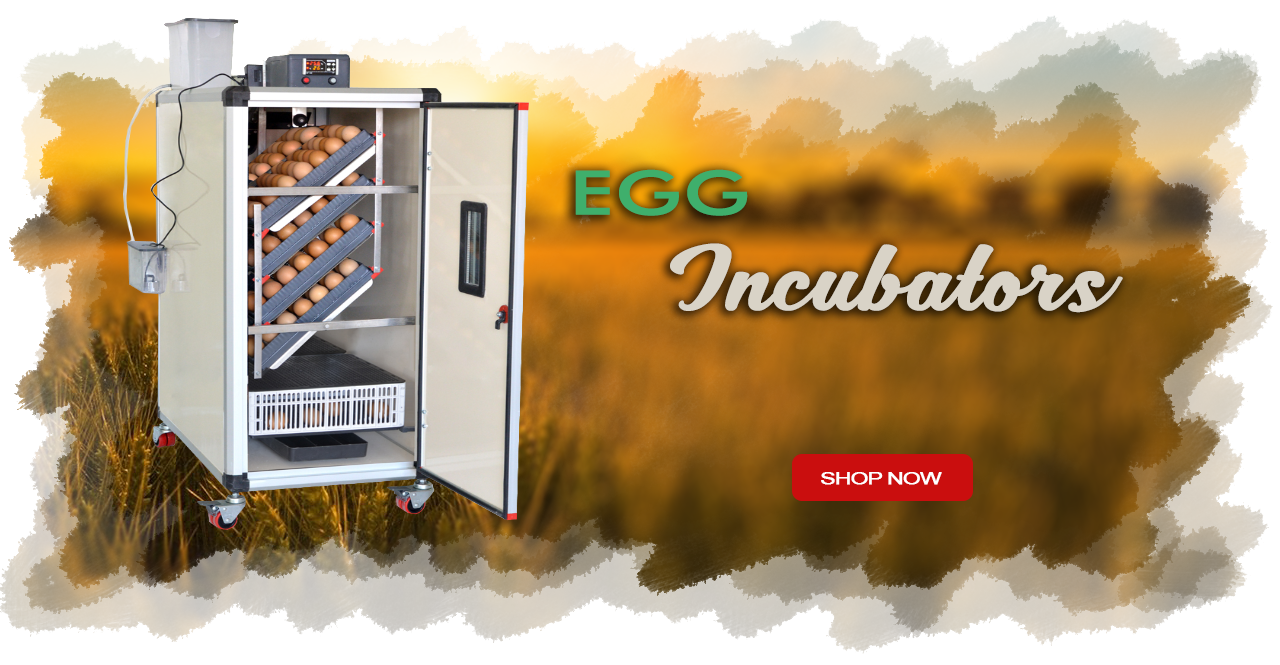 Quail Egg Incubators for sale in london