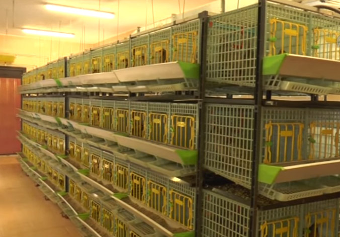 Example of partridge Breeding Room